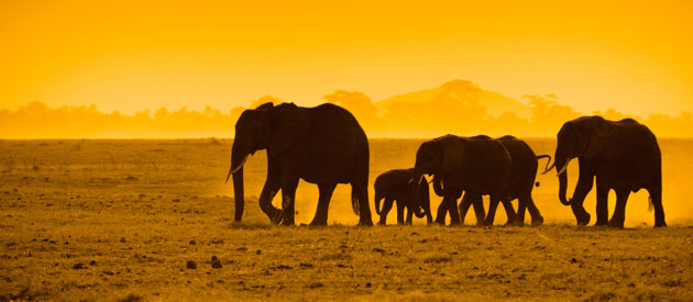 AFRICAN HONEYMOONS - KENYA HONEYMOON DESTINATION